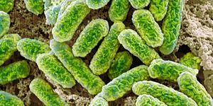 E coli bacterie darmbacterie CO2 kooldioxide broeikasgas klimaat klimaatverandering