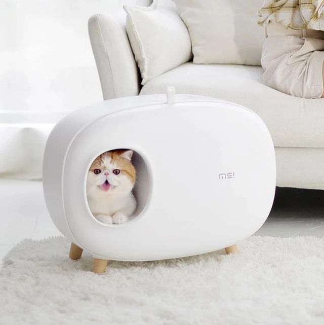 10個專為寵物設計的智能小物!APP餵食器、智能冷暖窩⋯ 其實你家的毛小孩過得比你爽多了