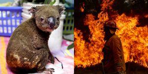 澳洲野火中的10個感動瞬間,讓你再次看見人性光輝!燒掉1.5個台灣、5億隻小動物,眾星呼籲氣候變遷很可怕