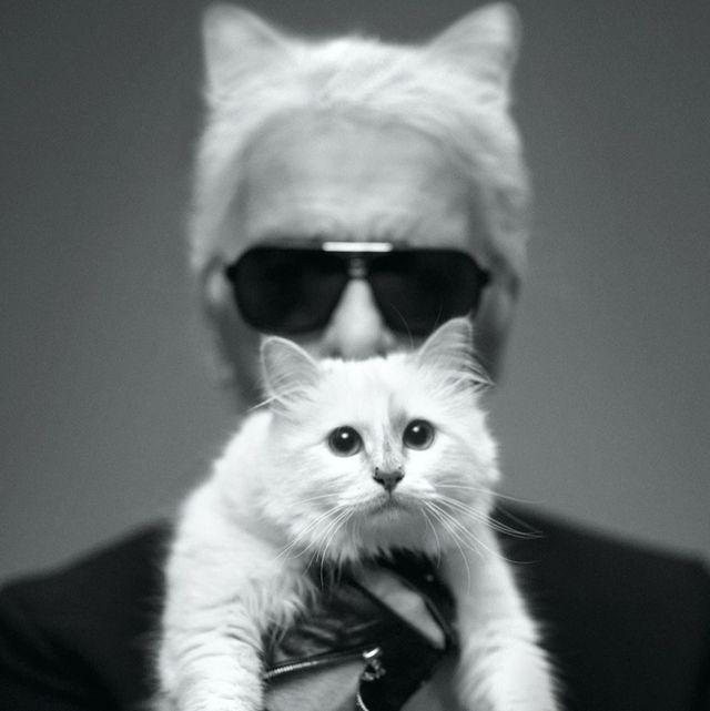老佛爺Karl Lagerfeld逝世一週年,大家都在問:那隻繼承了他遺產的貓咪,現在怎麼樣了?