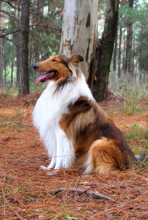 45 Best Large Dog Breeds Top Dogs