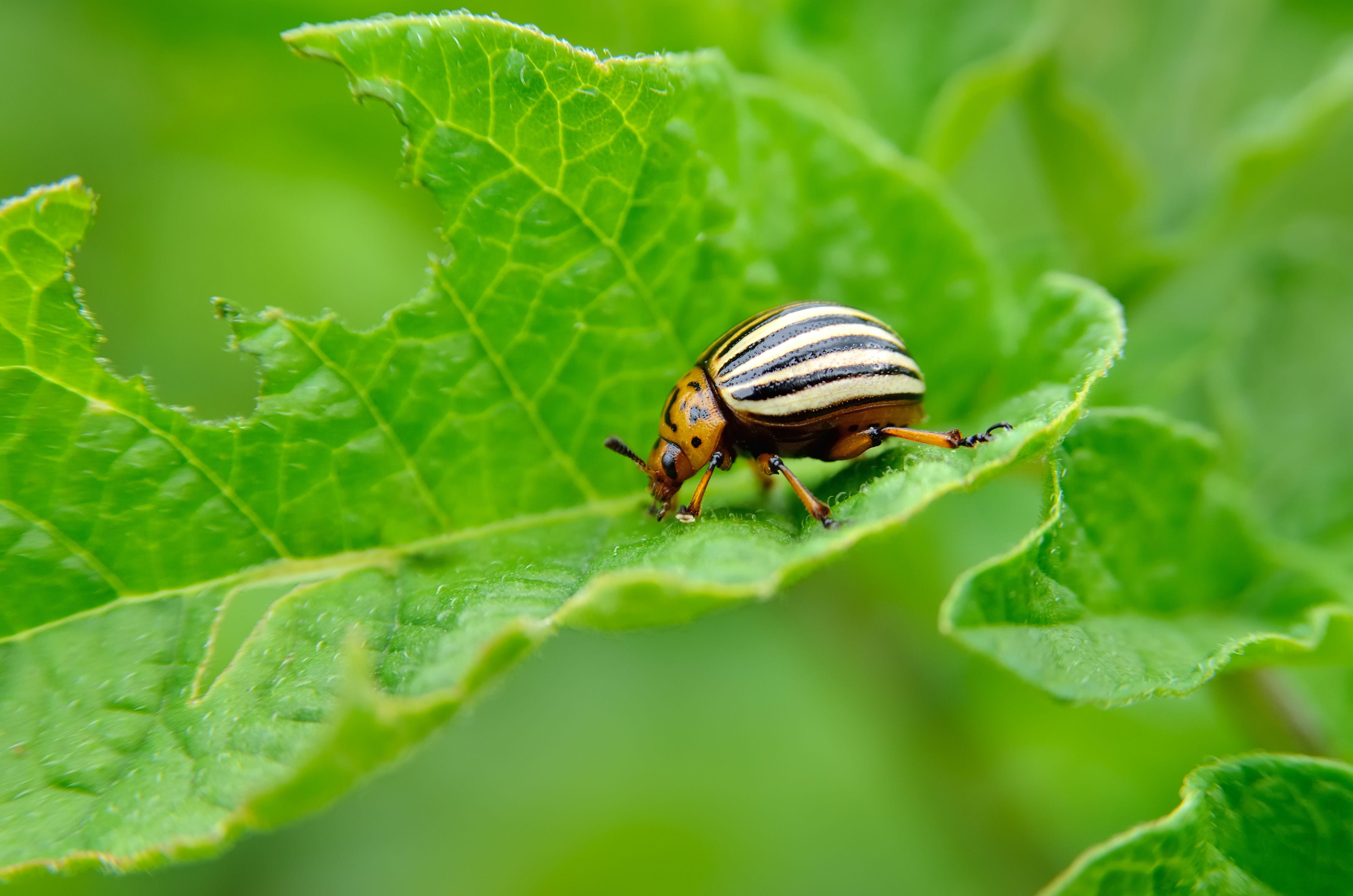 chew bugs
