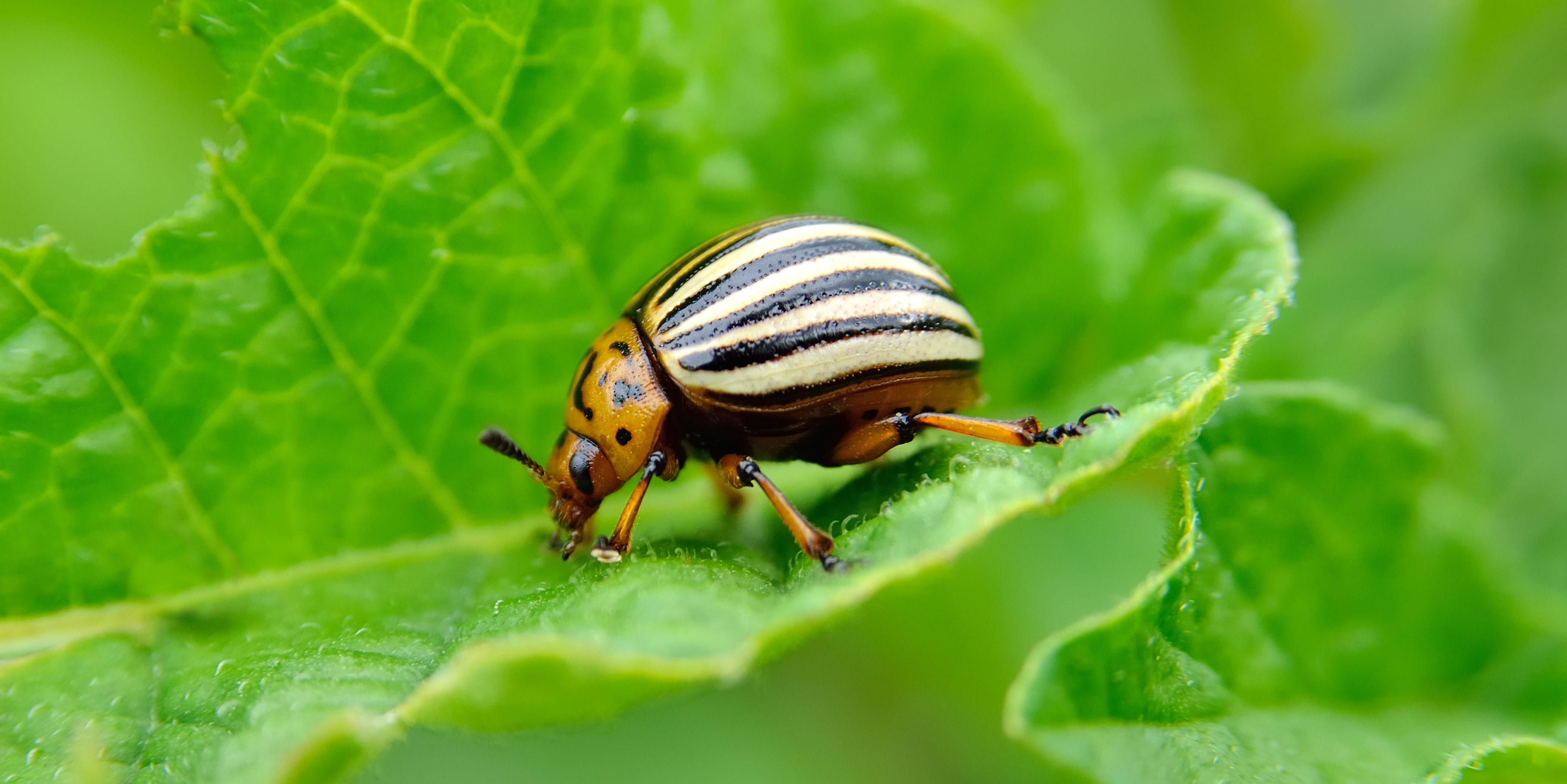 10 Most Destructive Garden Pests How To Keep Common Bugs Out Of Garden
