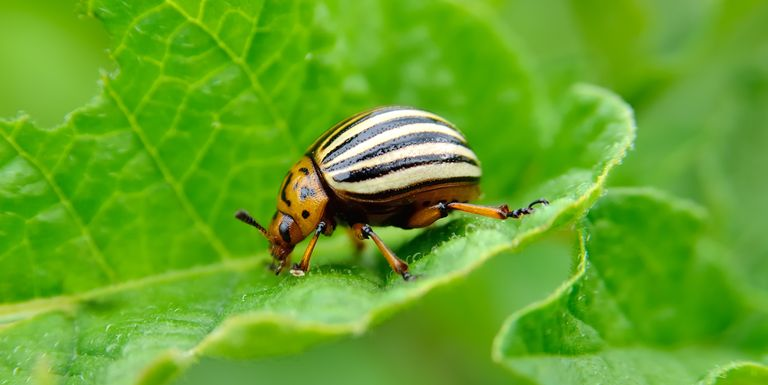 10 Most Destructive Garden Pests - How to Keep Common Bugs Out of Garden