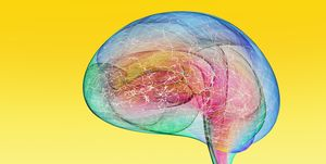 Colorful And Active Human Brain