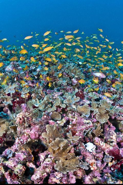 Colorful coral reef of Maldives