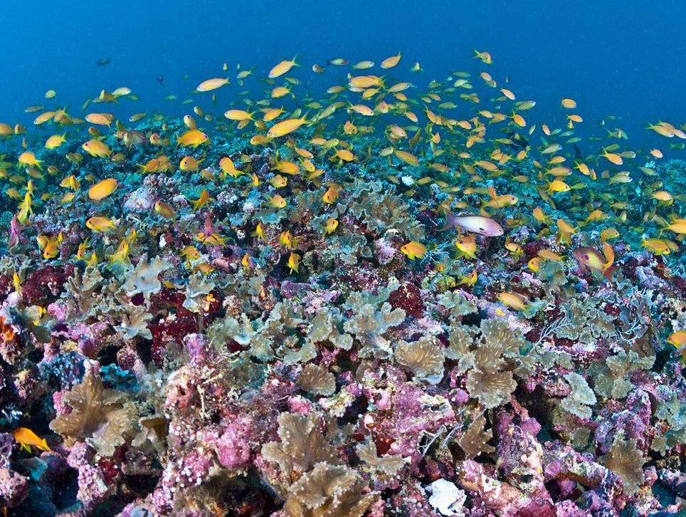 All Coral Reefs Could Be Dead Within 80 Years