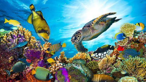 koraalrif met vissen en zeeschildpad