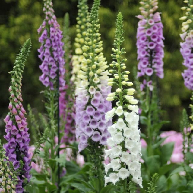 your ultimate guide to planting beefriendly flowers, season by season