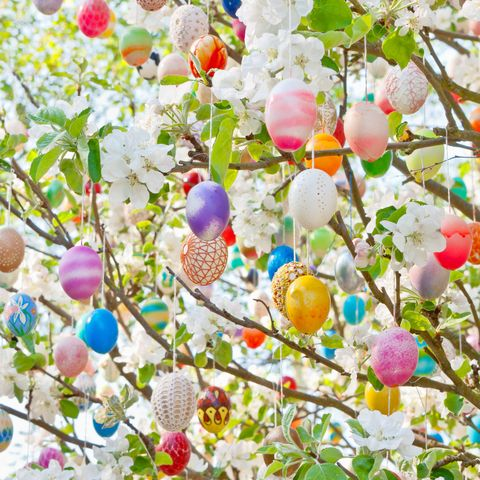 colorful handmade eastereggs on an apple tree