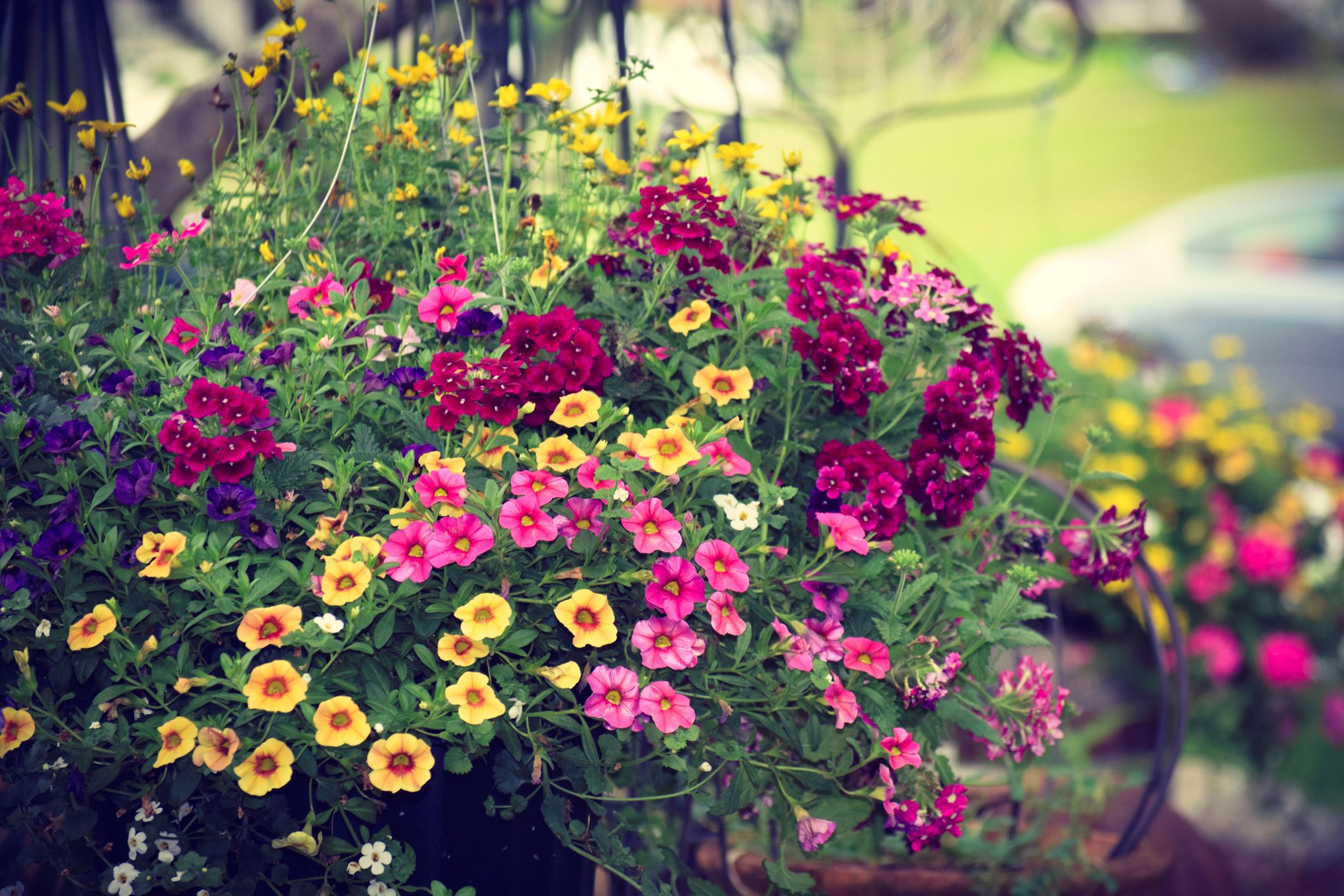 The best hanging basket plants for your front door or garden