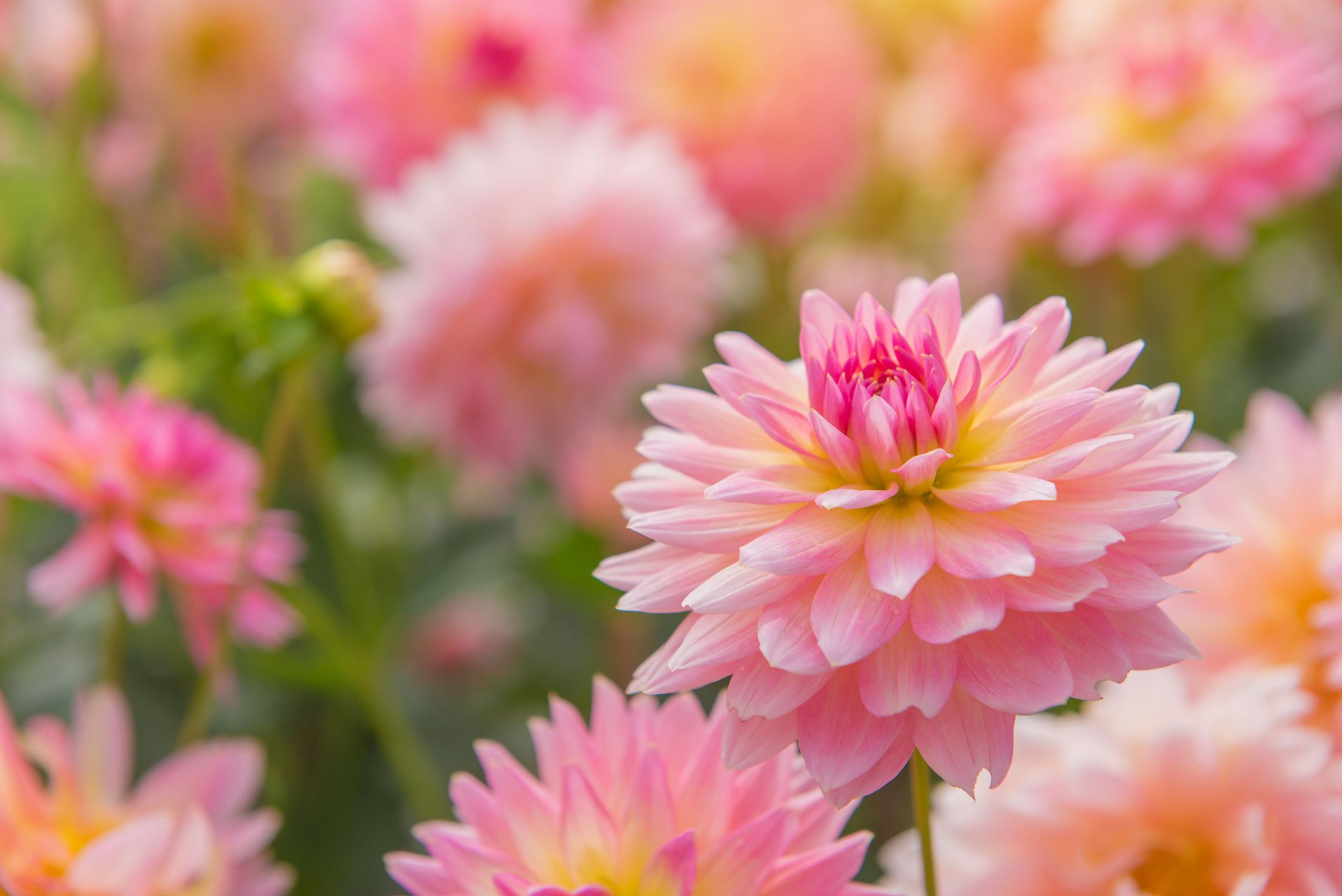 30 Best Summer Flowers , Beautiful Flowers That Bloom All Summer