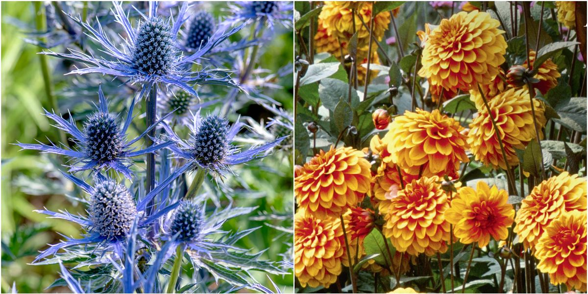 10 planting tips to help you play with colour in your garden