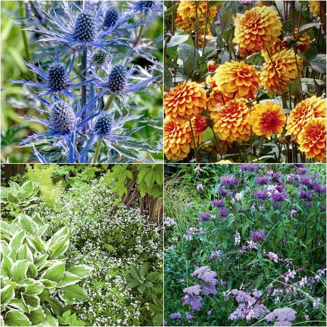 add colour to garden