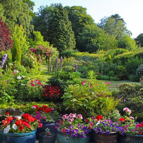 colourful english domestic garden full of flowers in july