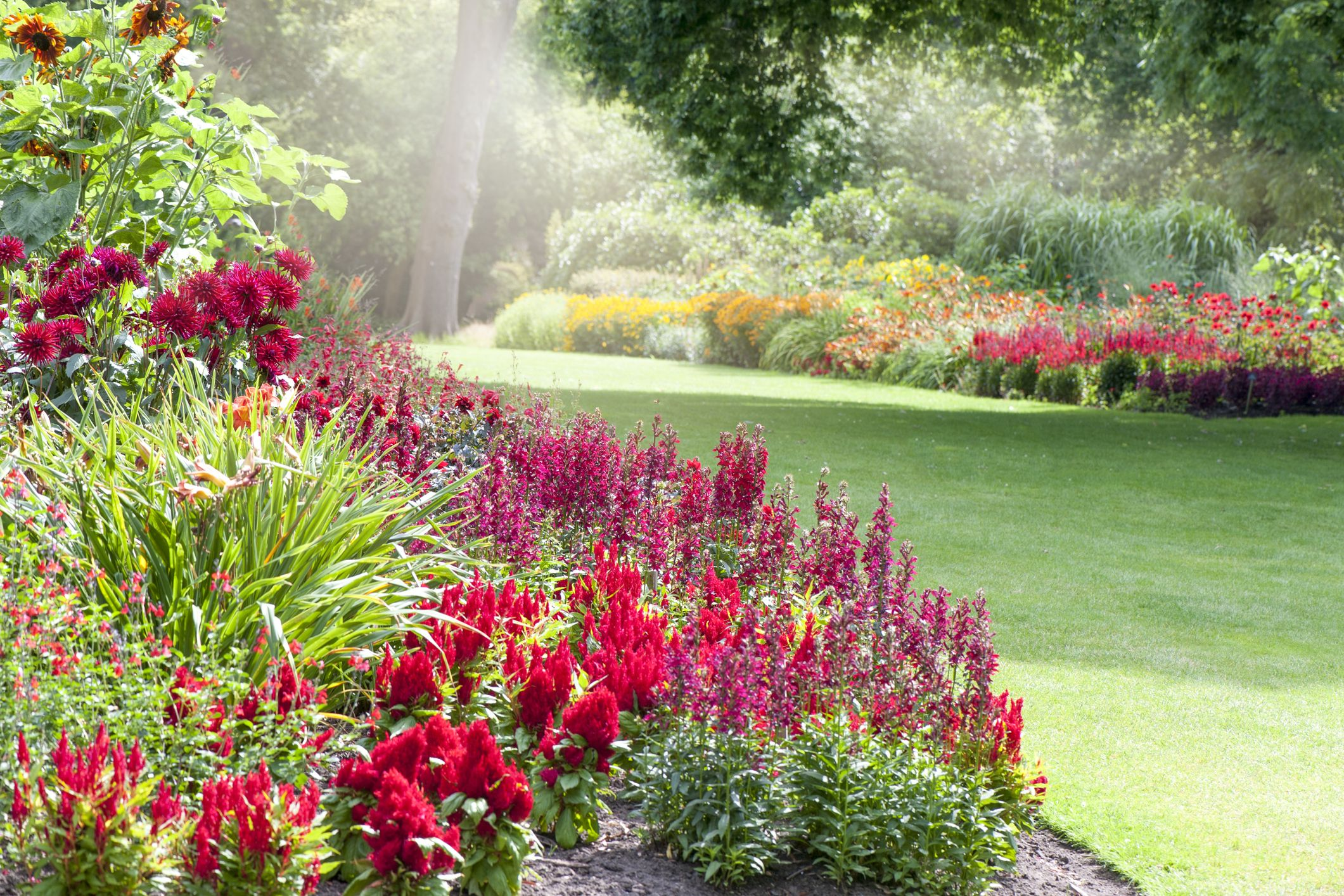 20 Red Flowers For Gardens Perennials Annuals With Red Blossoms