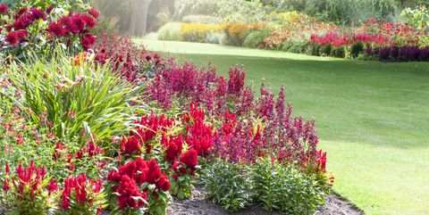 20+ Red Flowers for Gardens - Perennials & Annuals with Red ... Perennial Plants Blooms House on plants house plants, shade house plants, organic house plants, grass house plants, alpine house plants, greenhouse house plants, seasonal house plants, horticulture house plants, fast growing house plants, pruning house plants, fragrant house plants, hydrangea house plants, cutting house plants, sunflower house plants, rhizomes house plants, blue house plants, fruit house plants, forest house plants, shrub house plants, permanent house plants,