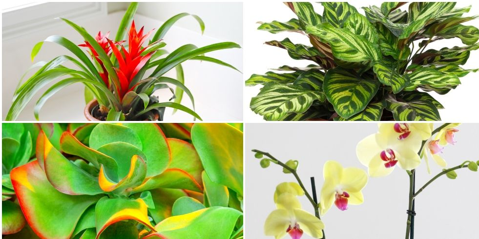 4 houseplants to bring colour into your home during autumn and winter