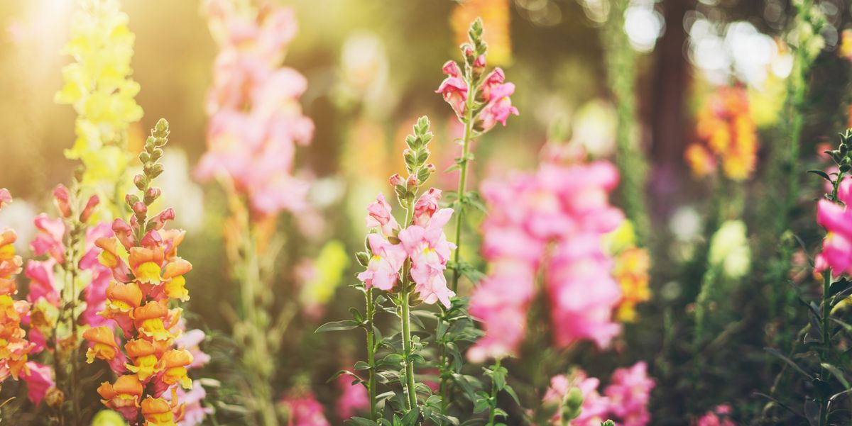 10 Hardy Flowers and Vegetables to Plant This August