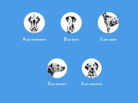 Font, World, Circle, Ball, Ball,