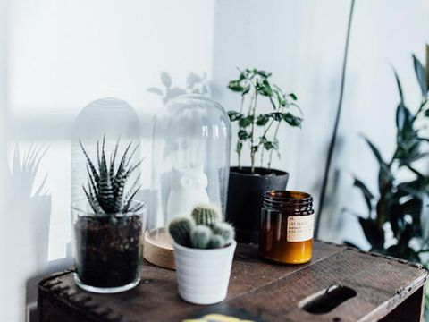 Plant, Flowerpot, Terrestrial plant, Houseplant, Interior design, Flowering plant, Vase, Thorns, spines, and prickles, Caryophyllales, Annual plant,