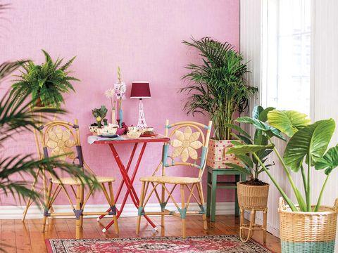 Resultado de imagen para decorar con plantas la casa
