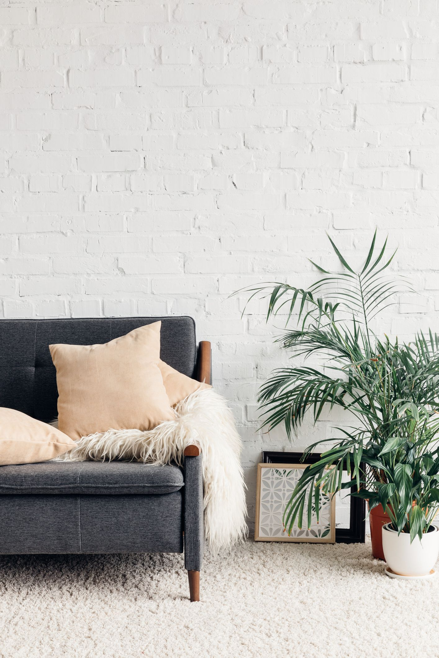 15 Best Living Room Plants to Dress Up Your Space