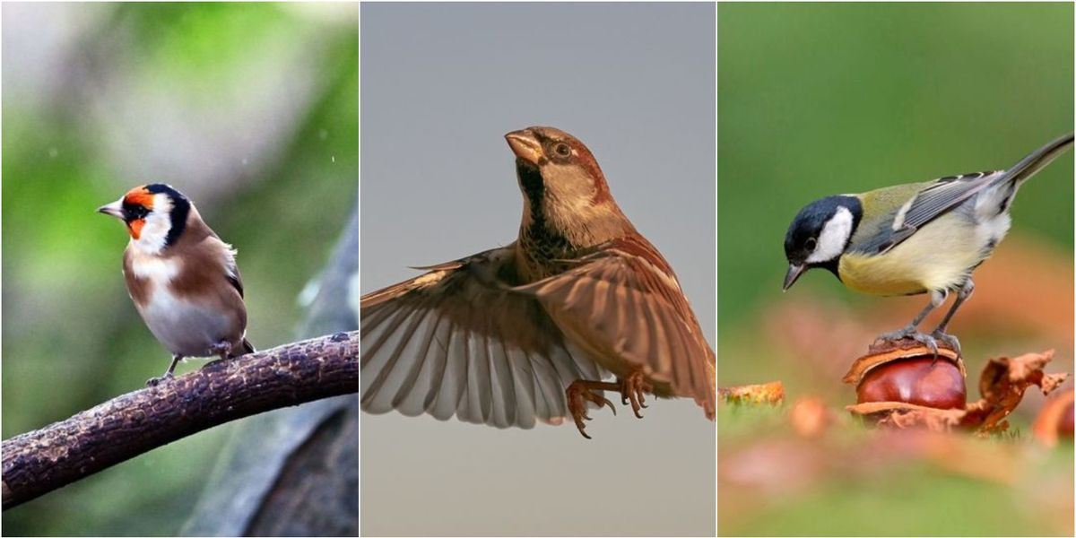 How many of these 10 common garden birds can you name