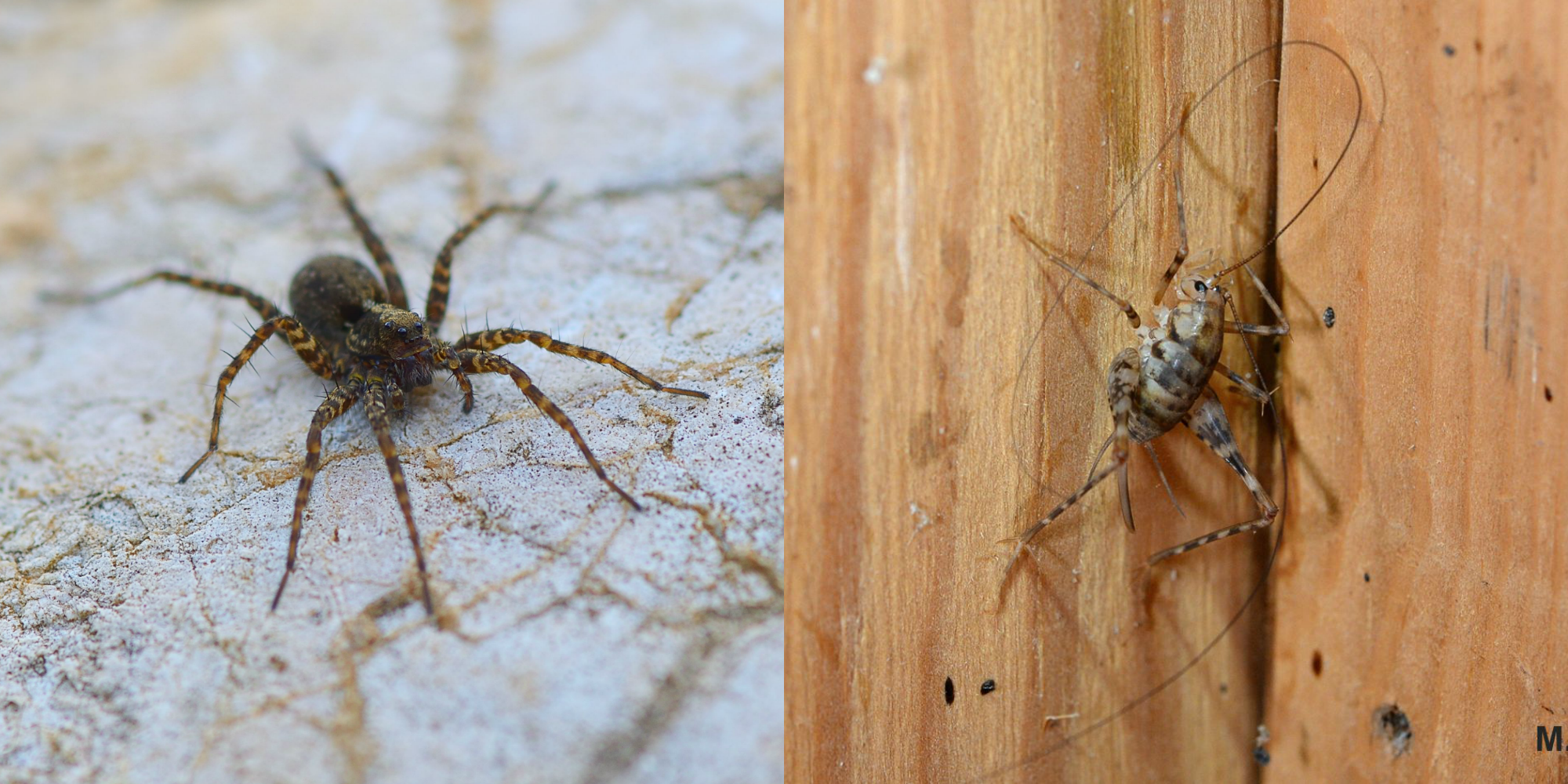 11 Common House Bugs and How to Identify Them, According to Insect Experts