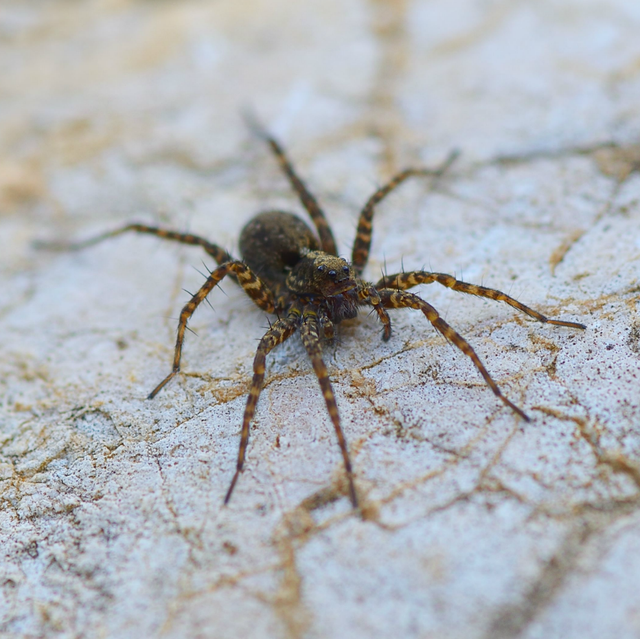 11 Common House Bugs To Know What Insects Live In Houses
