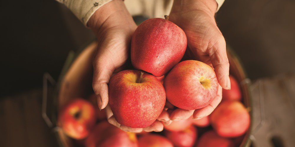 25 Different Kinds Of Apples And The Tasty Benefits Of