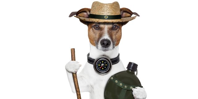 dog with a compass