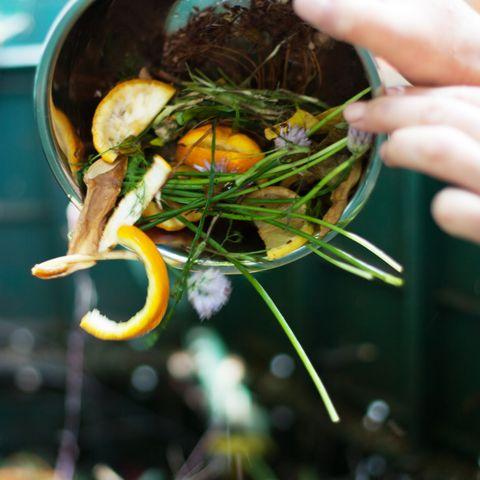 composting  plant care