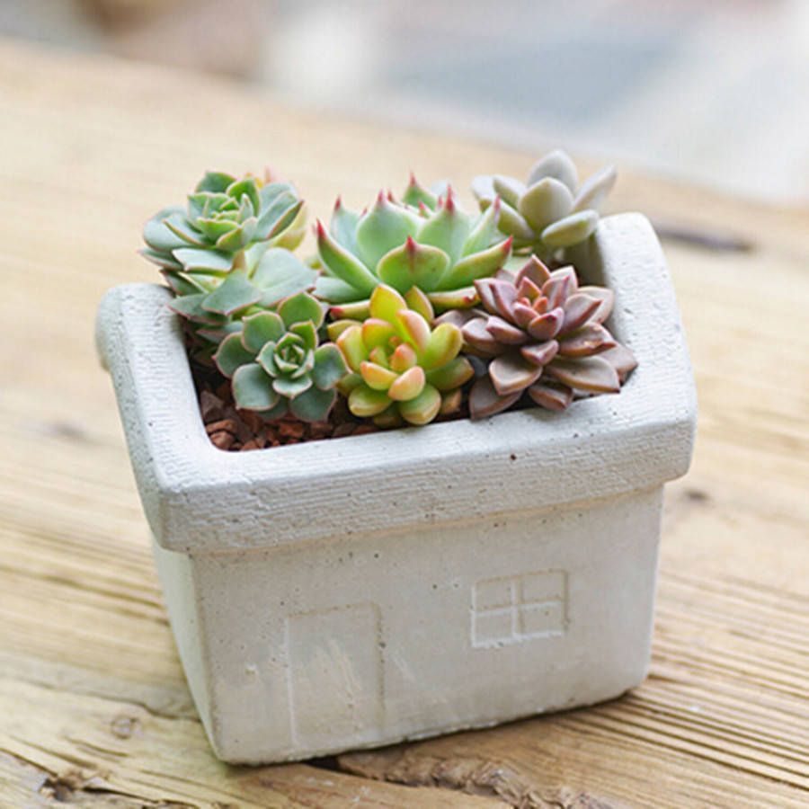 Concrete House Planter - Dingading Terrariums - not on the high street