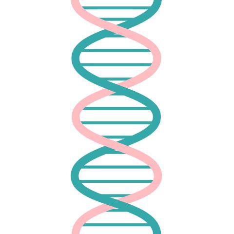 family history genes