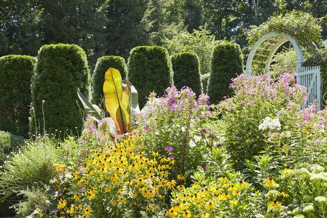 emerald green arborvitae columns herald the entrance to a perennial garden planted with phlox, angelica, sedum, cleome, and asters