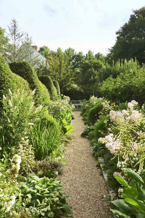 a garden trail of pebbles is bordered by different varieties of green plants