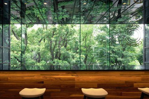 Nature, Green, Natural environment, Vegetation, Natural landscape, Tree, Property, Room, Interior design, Wall,