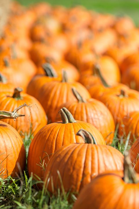 The Best Pumpkin Patches In America