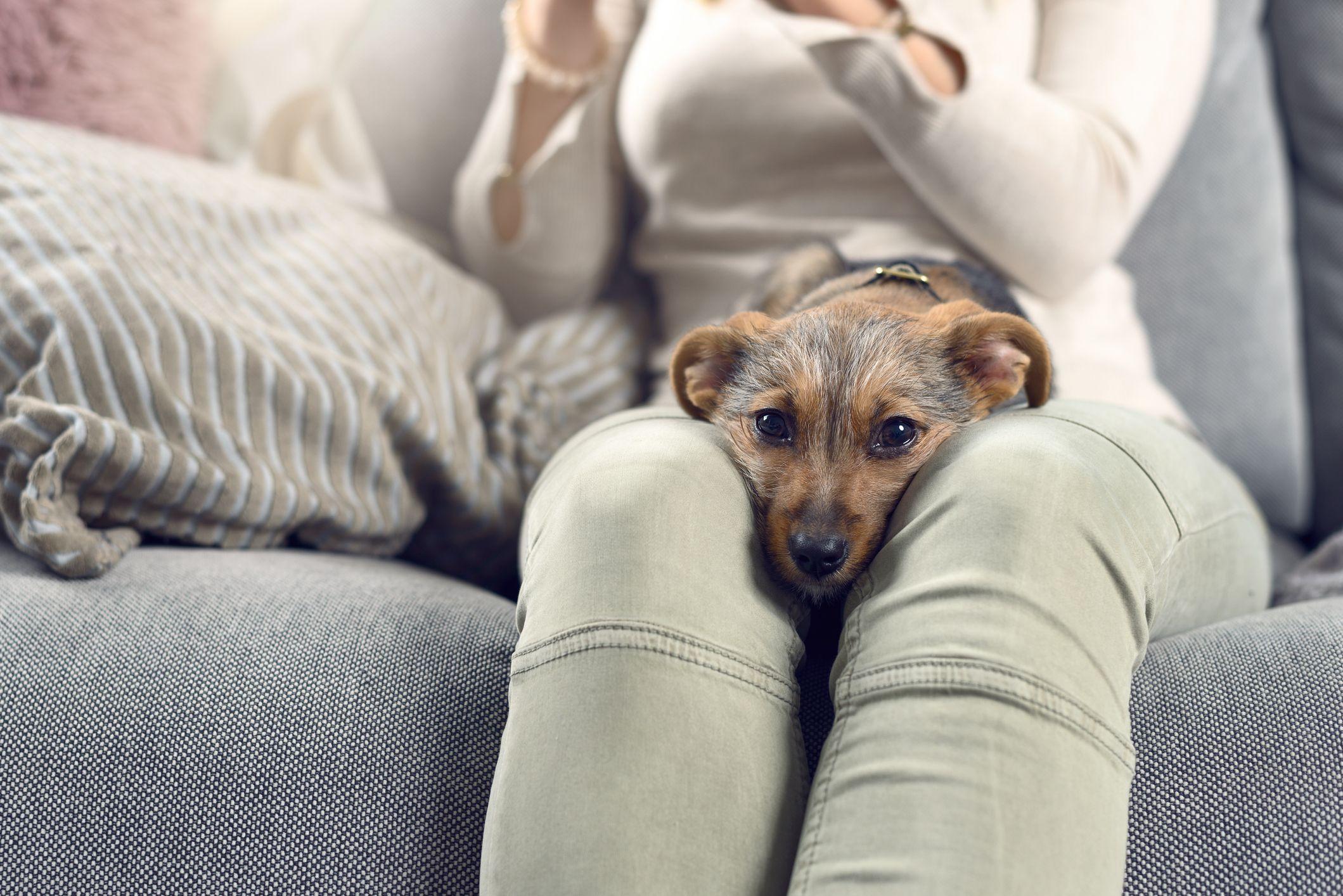 Dog Language - Understanding Dog Behavior at WomansDay com