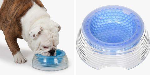 Product, Water, Bulldog, Canidae, Plastic bottle,