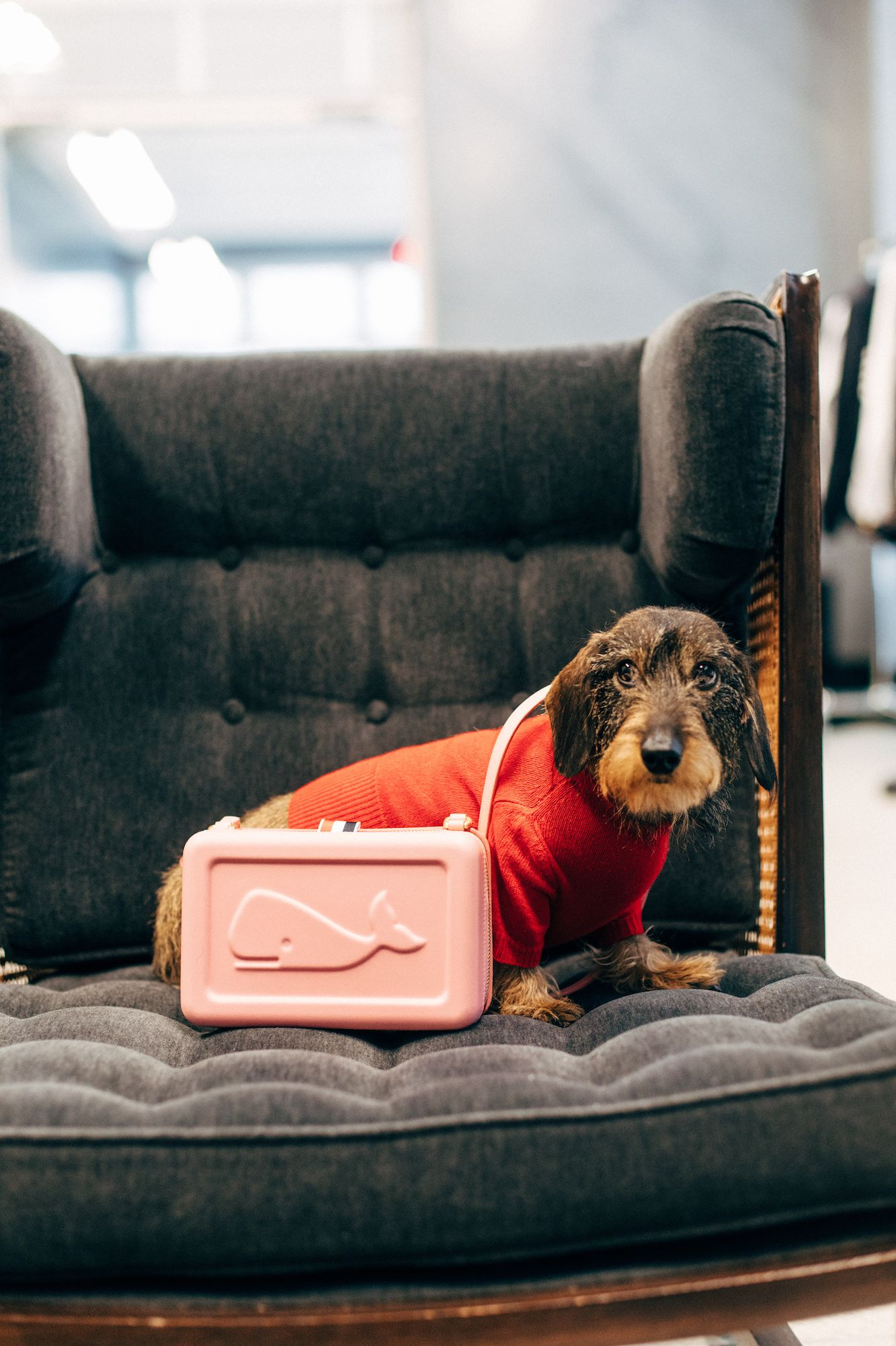 How the Chicest Dog in Fashion is Celebrating National Puppy Day
