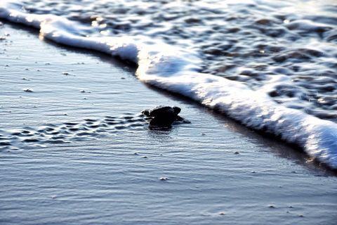 Liquid, Fluid, Wave, Wind wave, Calm,