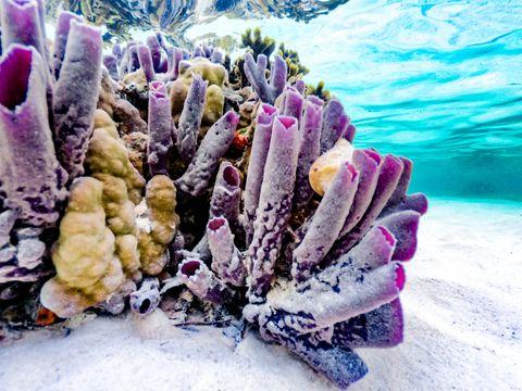Corals Around Zanzibar