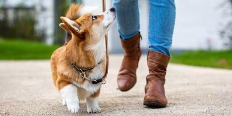 correas perro