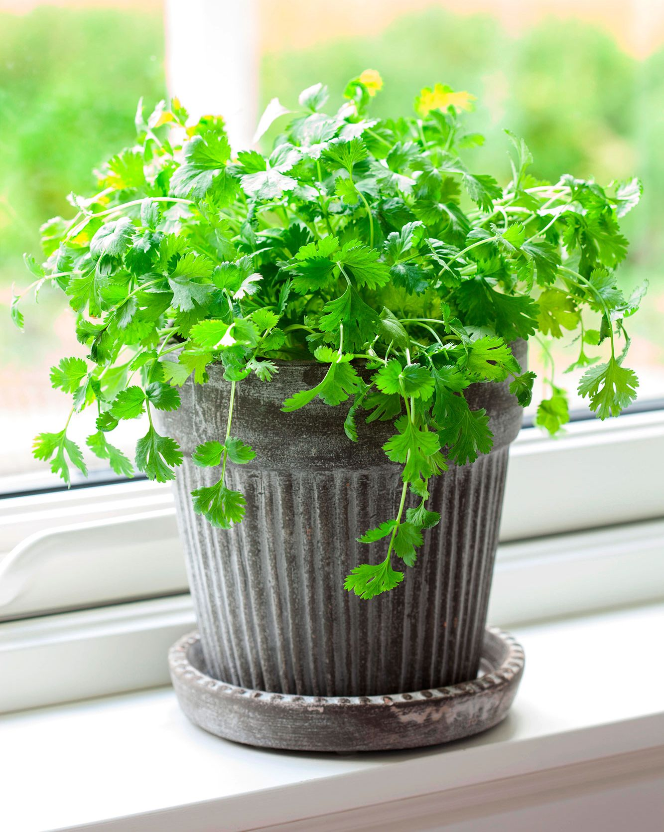 5 best herbs and spices to grow indoors