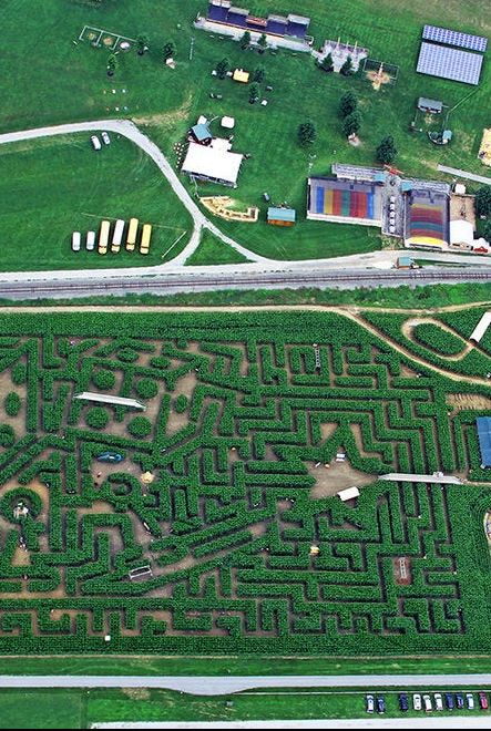 best corn maze