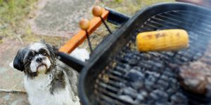 Dog looking at barbecue grill