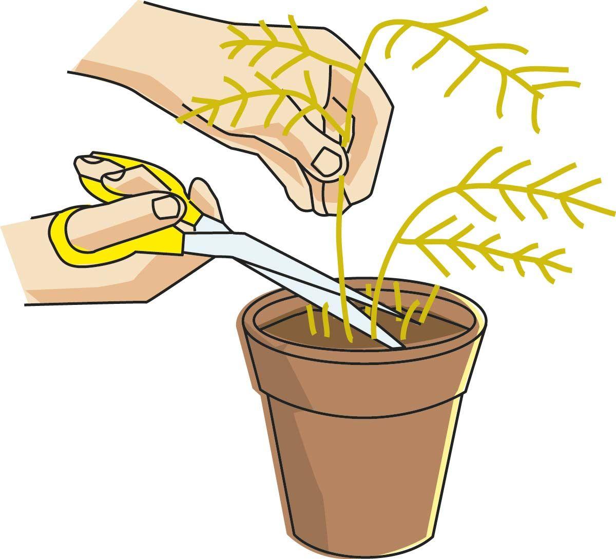Mira cómo puedes recuperar plantas secas - jardinería