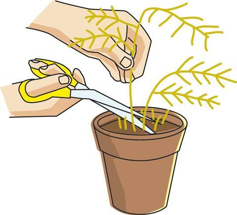 Cuidar plantas secas